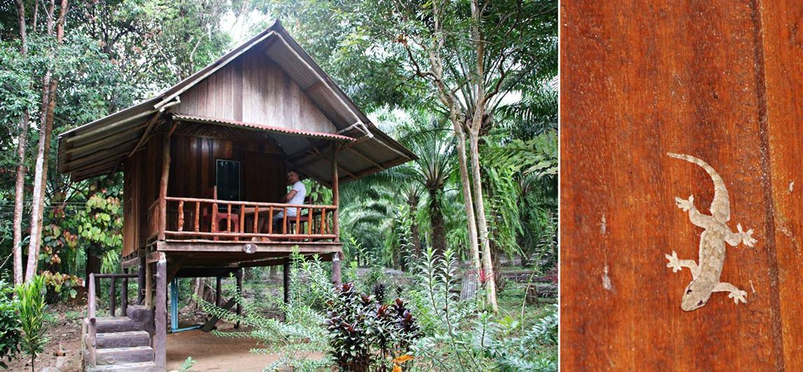 Khao Sok Tajlandia noclegi