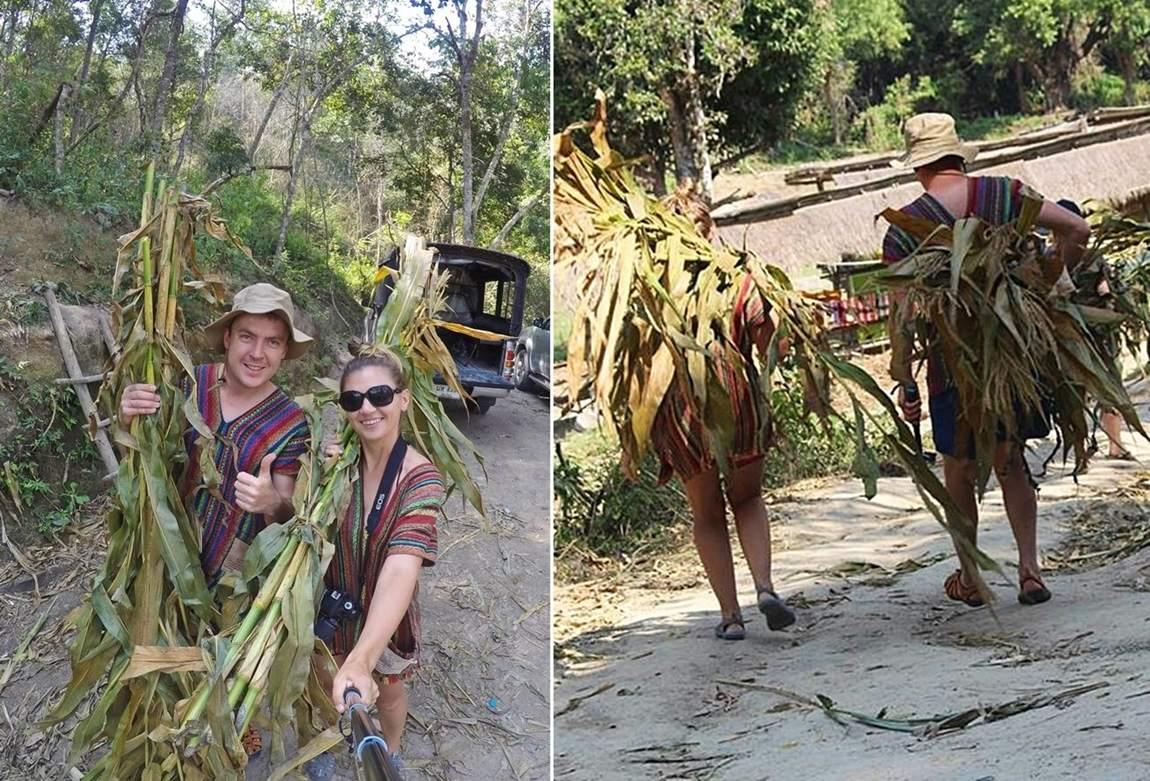 Rezerwat słoni w Tajlandii - trzcina cukrowa dla słoni