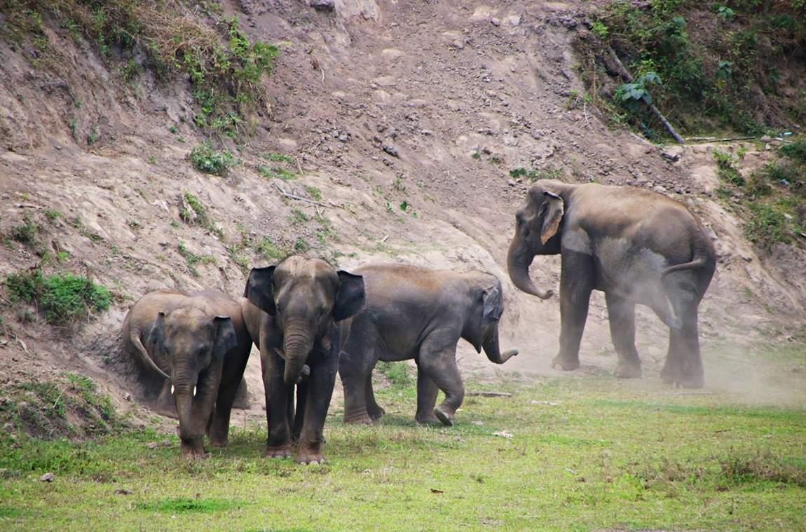Rezerwat słoni w Tajlandii - ciężkie słonie wznoszą tumany kurzu