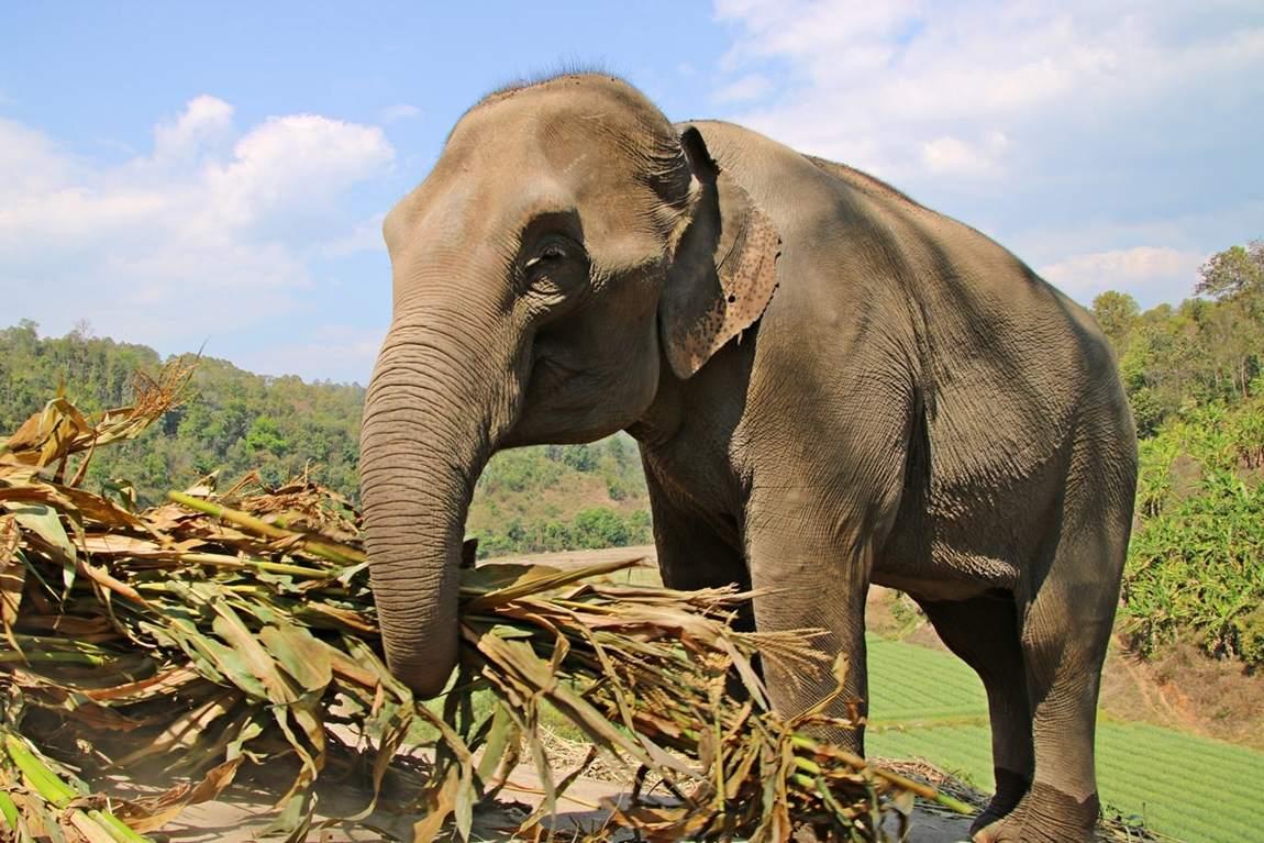 Rezerwat słoni w Tajlandii - słoń