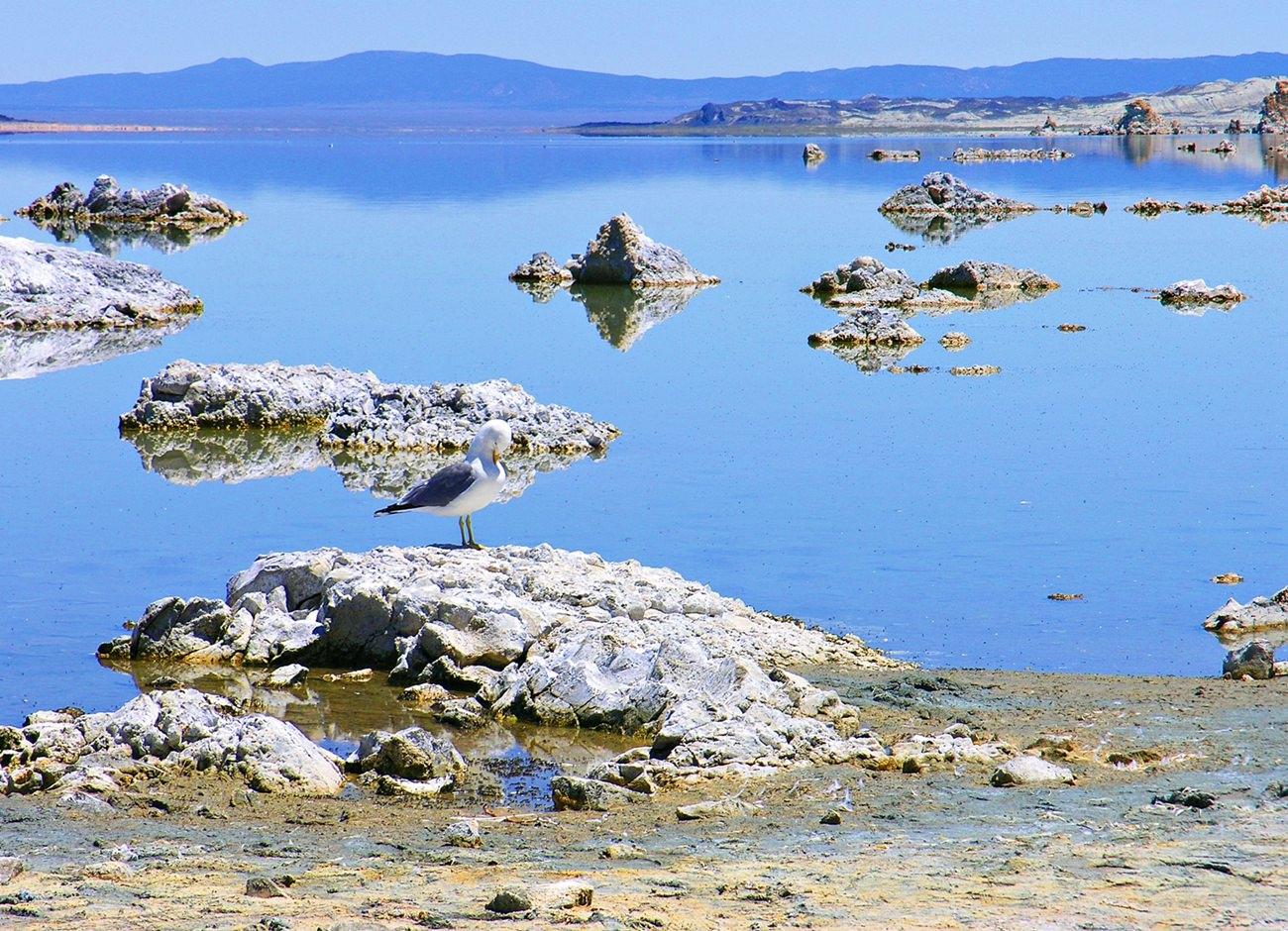 Jezioro Mono USA