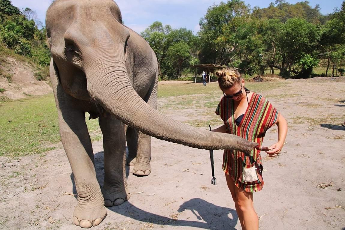 Rezerwat słoni w Tajlandii - karmienie słonia