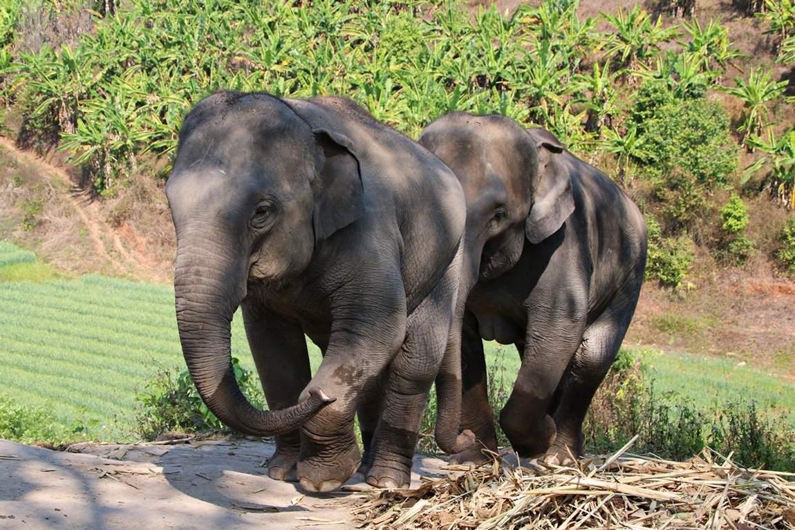 Rezerwat słoni w Tajlandii - słonie wchodzące na wzgórze