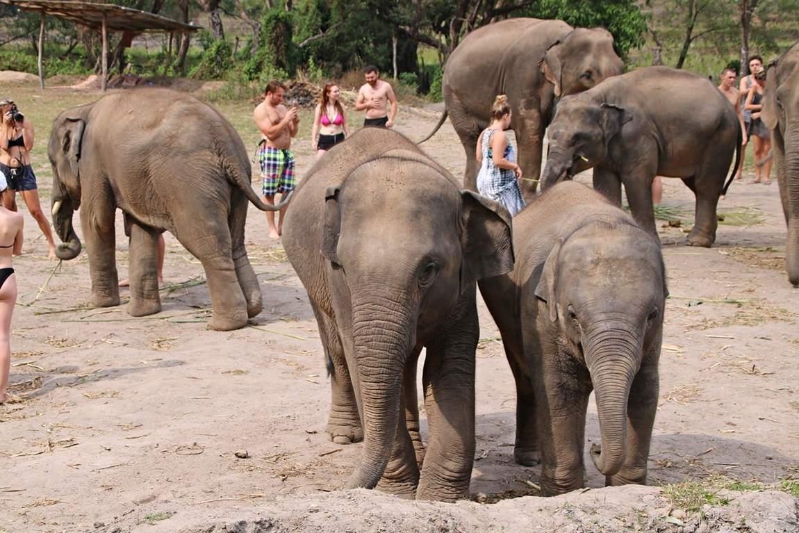 Rezerwat słoni w Tajlandii - sierociniec dla słoni