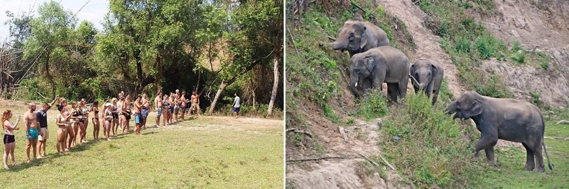 Rezerwat słoni w Tajlandii - ośrodek dla słoni