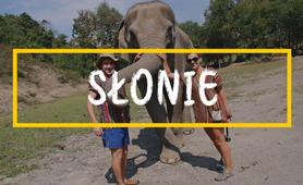rezerwat słoni w Tajlandii