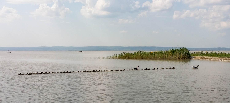Austria rowerem rezerwat ptaków
